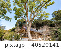 竈門神社 秋 宝満宮の写真 40520141