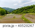宮城丸森 沢尻の棚田 40520267