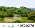 宮城丸森 沢尻の棚田 40520276