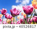 お花 フラワー 咲く花の写真 40526817