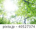 新緑の季節 光の輝き 40527374