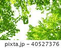 新緑の季節 40527376
