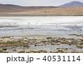 フラミンゴ 塩湖 風景の写真 40531114