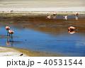 ラグーナエディオンダ フラミンゴ 湖の写真 40531544