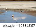 ラグーナエディオンダ フラミンゴ 湖の写真 40531567