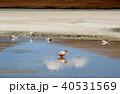 ラグーナエディオンダ フラミンゴ 湖の写真 40531569
