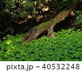 緑葉に覆われた湧水 40532248
