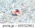 ヤドカリ 生物 水中の写真 40532961