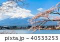 桜 富士山 河口湖の写真 40533253