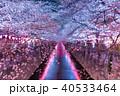 春 目黒川 目黒川桜まつりの写真 40533464