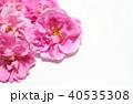 ダマスクローズ 40535308
