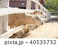 羊 40535732