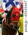競馬 競走馬 馬の写真 40545447