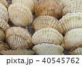 ホタテ 店頭 食べ物の写真 40545762