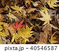秋の落ち葉 40546587