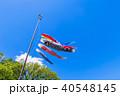 鯉幟 こどもの日 端午の節句の写真 40548145
