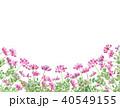 蓮華草 花 水彩のイラスト 40549155
