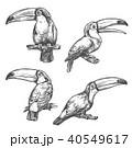 オオハシ科 シロムネオオハシ 鳥のイラスト 40549617