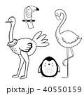 動物 だちょう オストリッチのイラスト 40550159