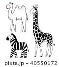 動物 しまうま シマウマのイラスト 40550172