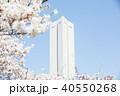 桜 平和塔 大仙公園の写真 40550268
