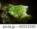 石垣島の鍾乳洞 40553565