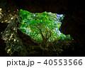 石垣島の鍾乳洞 40553566