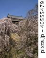 上田城 桜 北櫓の写真 40555479