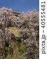 上田城 桜 北櫓の写真 40555481