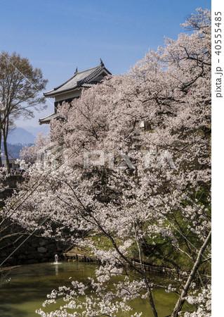 信州 長野県上田市 上田城跡のお堀の桜と北櫓 40555485