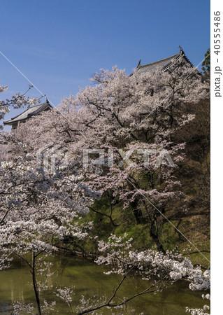 信州 長野県上田市 上田城跡のお堀の桜と北櫓と南櫓 40555486