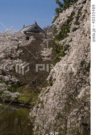 信州 長野県上田市 上田城跡のお堀の桜と北櫓 40555489