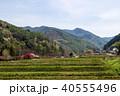 風景 自然 花桃の写真 40555496
