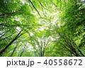 森林 40558672
