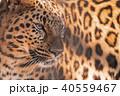 東武動物公園 チーター 40559467