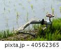 水田 農業用水 水道 蛇口 40562365