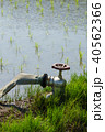 水田 農業用水 水道 蛇口 40562366