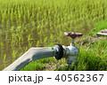 水田 農業用水 水道 蛇口 40562367