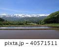 白馬の5月 野平からの白馬連峰 40571511