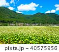 蕎麦の花と美山かやぶきの里 40575956