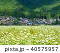 蕎麦の花と美山かやぶきの里 40575957
