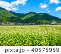 蕎麦の花と美山かやぶきの里 40575959