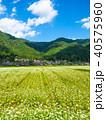 蕎麦の花と美山かやぶきの里 40575960