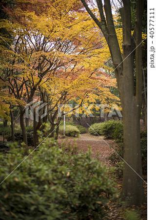 播磨の紅葉 (日岡山公園 兵庫県加古川市) 40577111