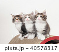 3匹のノルウェージァンフォレストキァットの仔猫 40578317