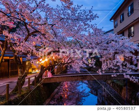 桜が満開の城崎温泉 40580537