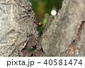 コガタスズメバチ 40581474