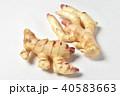 新生姜 40583663