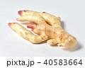 新生姜 40583664