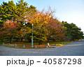 秋 木 秋色の写真 40587298